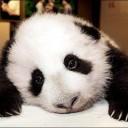 Pandapwnium's avatar