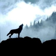 basicwolf