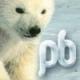 Polarbear541