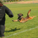 dogskool