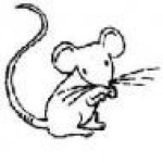 Profile picture of drmouse