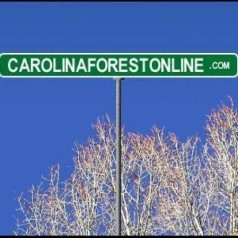 Profile picture of carolinaforestonline
