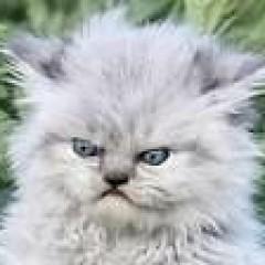 Алексей Маханьков's avatar