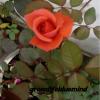 Vijaya Lakshmi profile image