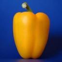 James A. Rosen avatar