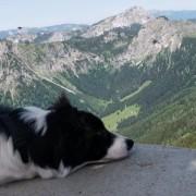 Stephan Bechter's avatar