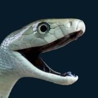 Luciano Paciornick profile picture