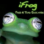 Profile picture of ifrog