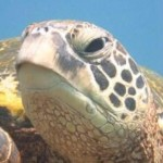 Profile picture of turtletrax