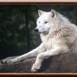 الصورة الرمزية مخلب الذئب