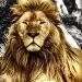 lioncanvas