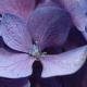 mlibrarianus
