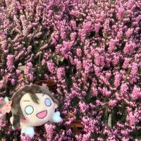 SaltyColaaa avatar