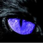 Raphael2006 avatar