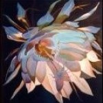 Profile picture of cereus