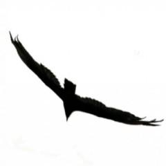 Ajmme Kajros's avatar