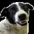 alphadogg