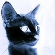 obsidiancat