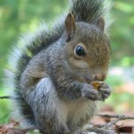 Profile picture of squirreling
