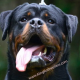 King Rottweilers