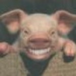 Profile picture of evilpig