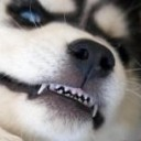 LostWolf's avatar
