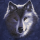 Picture of Blackwolf2