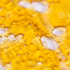 Shatter Online Canada's avatar