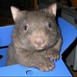 Profile picture of wombatgroup