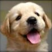 chris vian's avatar
