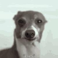 tbpbastos avatar