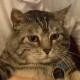 Austin Jackson's avatar