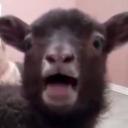 Defla's avatar