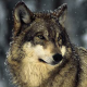 Ambivorous's avatar