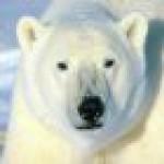 Chromium (CefSharp) Tor Browser - CodeProject