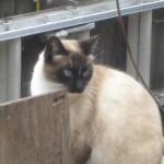 Profile picture of feral