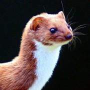 nerylix's avatar