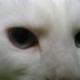 Vel's avatar