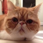 Profile picture of mollycat71