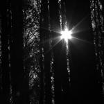 الصورة الرمزية Point of Light