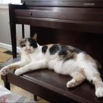 Gary McGath