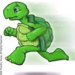 Profile picture of Turtles Run