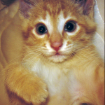Profile picture of Sandra Huerta