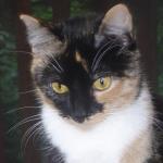 Profile picture of Kitten Whisperer in Oregon (8/27)