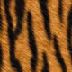Profile picture of Reisetiger