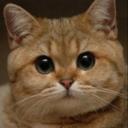 maximusng's avatar