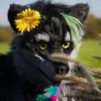 hthnightwolf@gmx.des Avatar