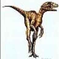 eoraptor013