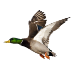 Profile picture of quackofdawn