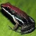 Froggz's avatar